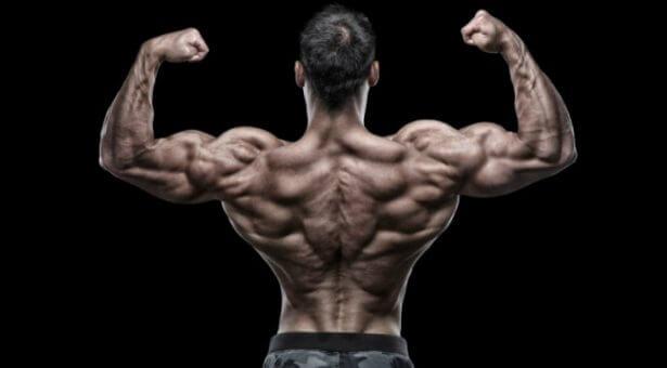 懸垂の効果は広い背中!懸垂ができない人向けのやり方も紹介 | 筋肉総合NO.1/筋トレするならマッスル