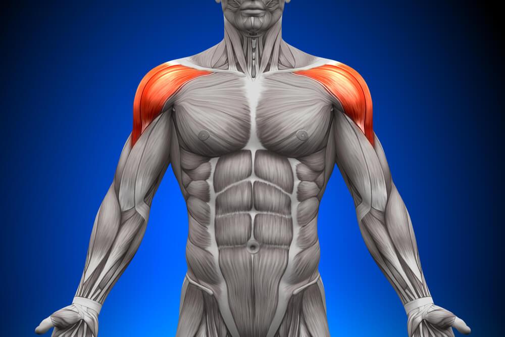 ミリタリープレスのターゲット部位である肩のフロント