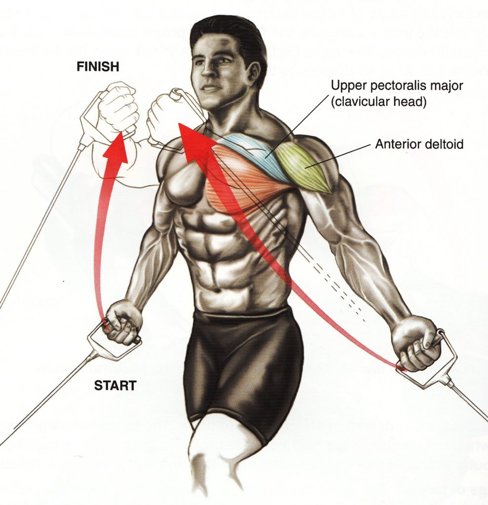 ケーブルクロスオーバーの動きと使われる筋肉の部位