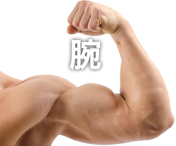 腕の筋トレの記事一覧
