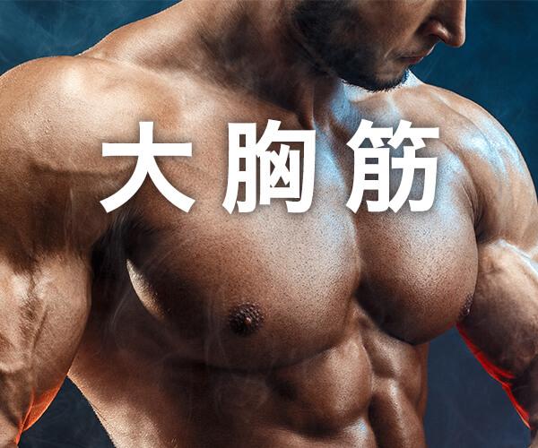 大胸筋の筋トレの記事一覧